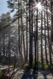 Słońce promienieje przez mgły i wysokich drzew, Vancouver wyspa, Kanada Fotografia Royalty Free