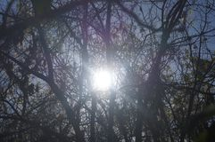 Słońce przez drzew Obrazy Royalty Free