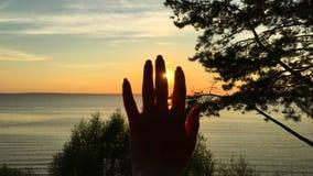 Słońce przez ręki zdjęcie wideo