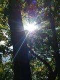 Słońce przez ulistnienia zdjęcia stock