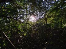 Słońce przez warkocza, ciemny przedpole z jaskrawym światłem słonecznym, fotografia nabierająca UK fotografia royalty free