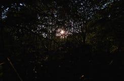 Słońce przez warkocza, ciemny przedpole z jaskrawym światłem słonecznym, fotografia nabierająca UK zdjęcia royalty free