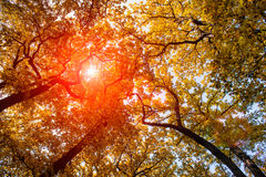 Słońce przy jesień lasem Zdjęcie Royalty Free