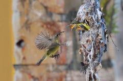 Słońce ptak Fotografia Stock