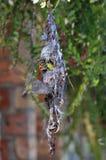 Słońce ptak Fotografia Royalty Free