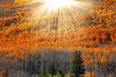 Słońce raca nad Osikowymi drzewami Zdjęcia Stock
