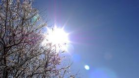 Słońce Roztapiający Śnieżny upływ zbiory wideo