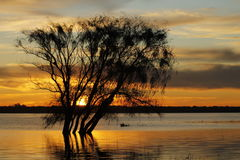 Słońce rzeki drzewo Obraz Royalty Free