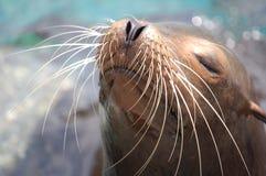 słońce seal Obraz Stock