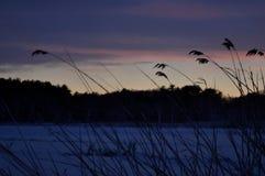 Słońce sety nad bagnem w zimie Fotografia Royalty Free
