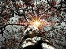 Słońce shinning przez gałąź drzewo Zdjęcia Royalty Free