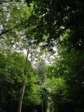 Słońce shinning przez przerwy w drzewach Obraz Royalty Free