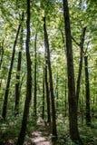 Słońce spada kaskadą puszek na lasową podłoga, zwiastuje nowego dzień świeżego bez błędów w nim zdjęcia stock