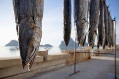 Słońce suchy makrele łowi w tajlandzkim wioski rybackiej prachuap khiri Fotografia Royalty Free