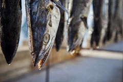 Słońce suchy makrele łowi w tajlandzkim wioski rybackiej prachuap khiri Zdjęcia Stock