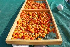 słońce suszonych pomidorów Zdjęcie Royalty Free