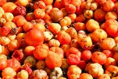 słońce suszonych pomidorów Obraz Royalty Free
