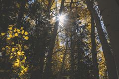 Słońce though drzewa fotografia royalty free