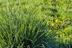 Słońce topi mróz na trawie zdjęcie royalty free