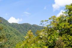 Słońce uderza ulistnienie Nowa Zelandia podocast lasu rodzimy przedpole obrazy stock