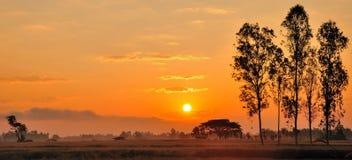 Słońce ustawiający przy ryż polem Obraz Stock