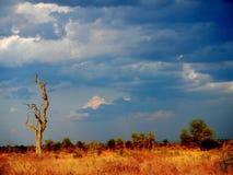 Słońce ustawiający w głębokiej sawannie, kruger bushveld, Kruger park narodowy, POŁUDNIOWA AFRYKA Zdjęcia Stock