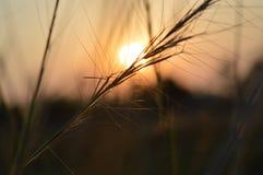 słońce w dół Obrazy Royalty Free