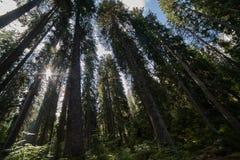 Słońce w drewnie Zdjęcia Stock