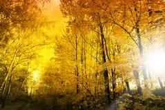 Słońce w jesień lesie Zdjęcia Royalty Free