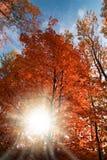 Słońce w jesień lesie Zdjęcie Stock