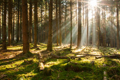 Słońce w lesie Zdjęcie Royalty Free