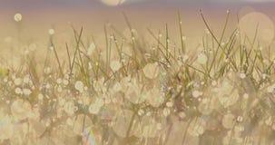 Słońce w wodnych kroplach zdjęcie wideo