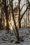 Słońce wschodu słońca zima Zdjęcie Stock