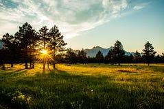 Słońce wybuch przez łąkowych sosen Zdjęcia Stock