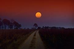 Słońce wzrasta nad sawanny trawy polem Fotografia Royalty Free
