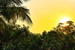 Słońce wzrost Zdjęcia Stock