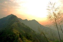 Słońce wzrost Obraz Stock