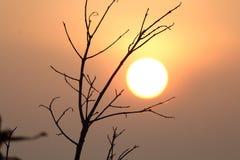 Słońce wzrost Fotografia Royalty Free