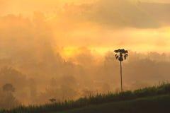 Słońce wzrost przy Petchabun Zdjęcia Royalty Free