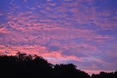 Słońce wzrost w Bluegrass Fotografia Royalty Free