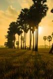 Słońce wzrosty Obraz Stock