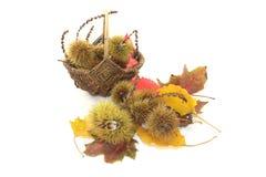 Słodcy kasztany w koszu Fotografia Stock