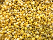 Słodcy kukurydzani nasiona dla tła Zdjęcia Stock