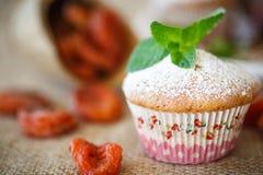 Słodcy muffins z wysuszonymi morelami Obrazy Royalty Free