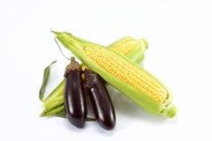 Słodka świeża kukurudza Obraz Royalty Free