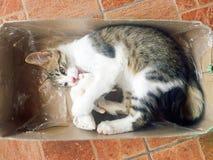 Słodka i piękna figlarka bawić się z myszą obraz stock