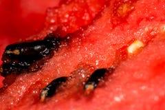Słodka i soczysta arbuz braja fotografia stock