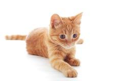 słodka imbirowa kotku Obrazy Stock