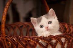 słodka kociak trochę Zdjęcie Royalty Free