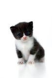 słodka kotku obrazy stock